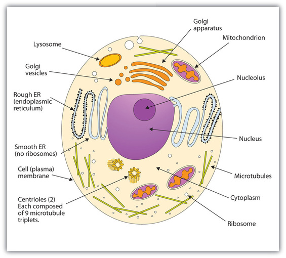 Home About Animal Cells Plant cells Structure and Functions Quiz